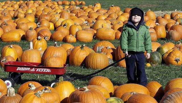 Fruits et légumes de saison : automne