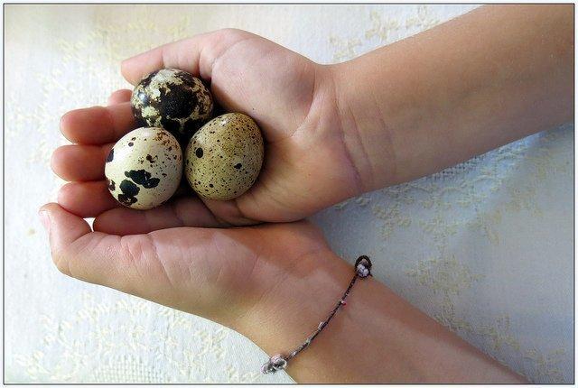 Oeufs de caille (flickr.com)
