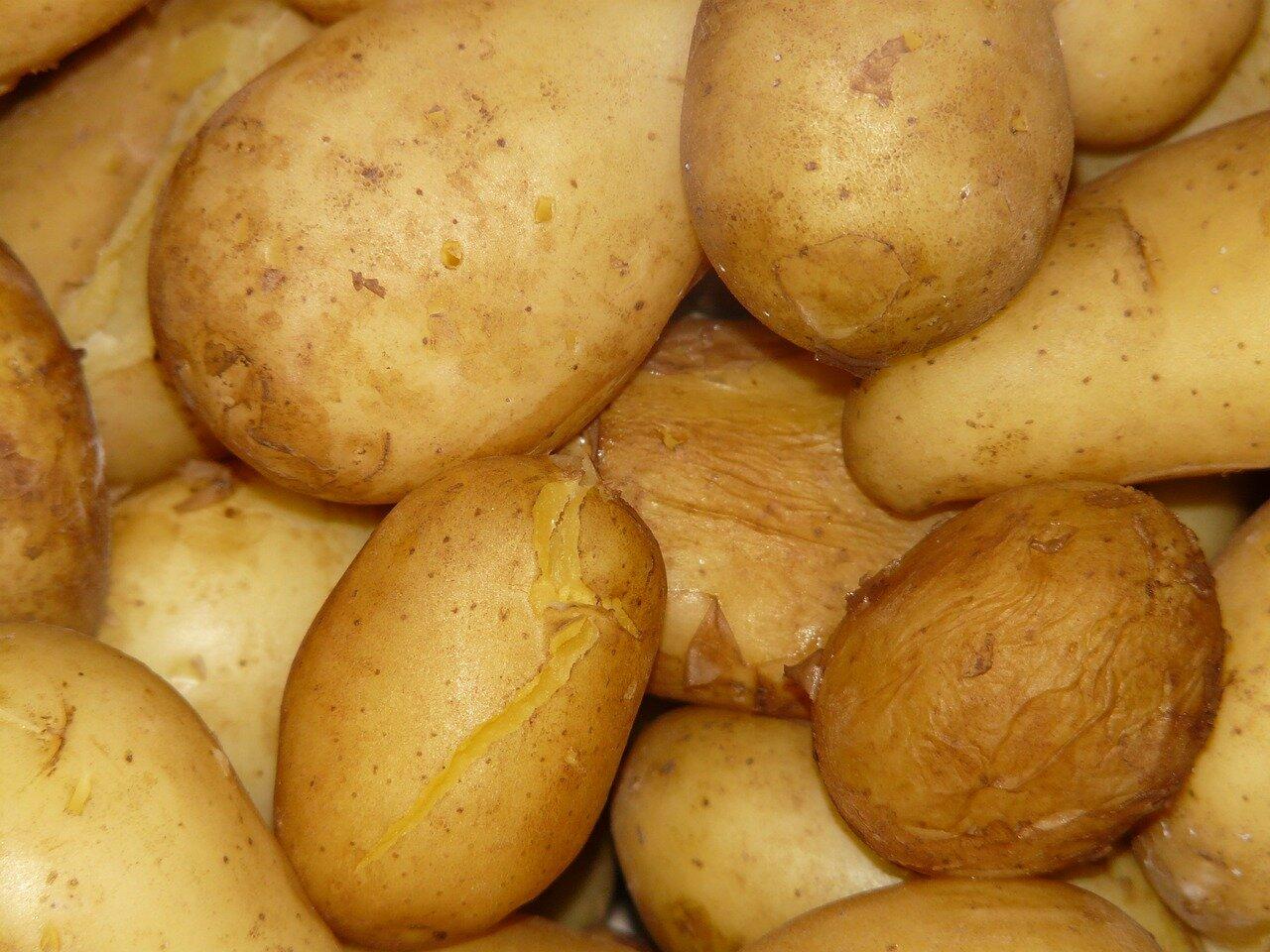 Pommes de terre pour salade